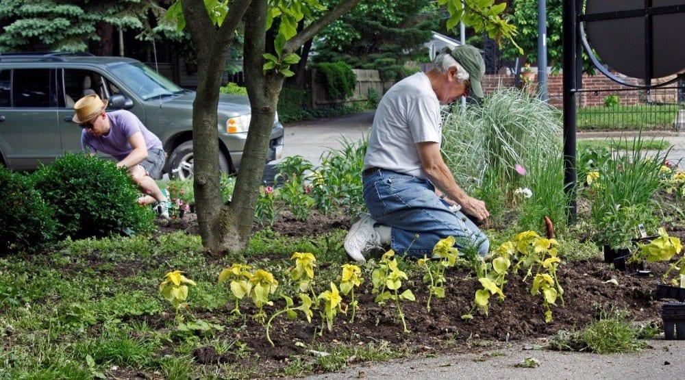 Schiller Planting